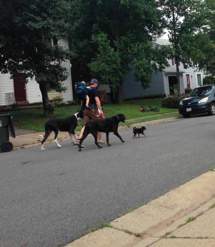 dog-walk-baby